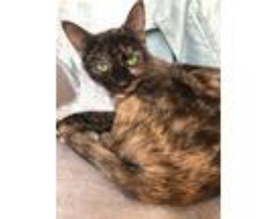 Adopt Selene a Tortoiseshell Domestic Shorthair (short coat) cat in La Grange