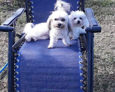 **CAGE FREE**Doggy daycare and boarding **