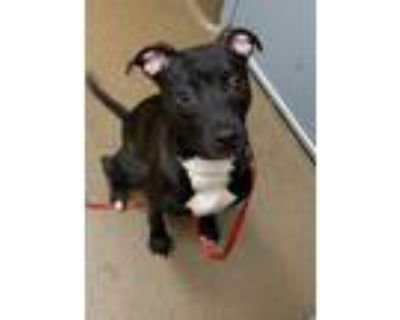 Adopt Whitney (FOSTER TO ADOPT) a Mixed Breed