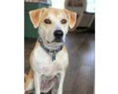Adopt Lady Luck a Tan/Yellow/Fawn Mixed Breed (Medium) / Mixed dog in West