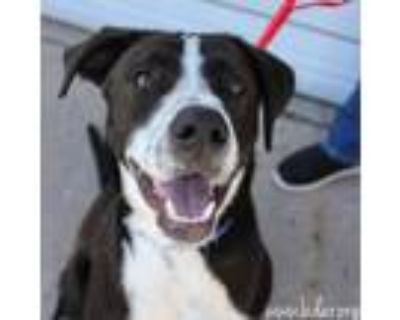 Adopt Cole a Pointer