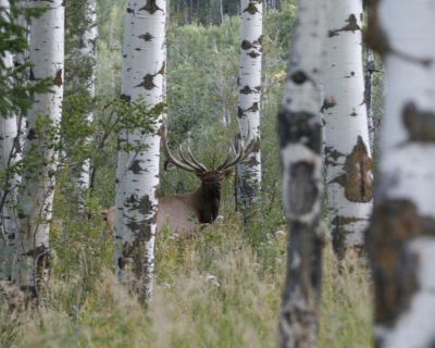 DIY High Success private land elk hunts, Trespass fee or with meals and lodging