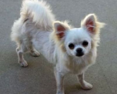 ISO a LONG Coat Male With Full AKC in Arizona
