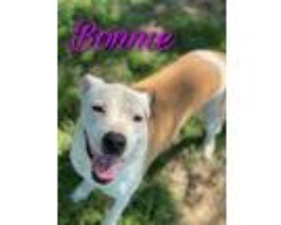 Adopt Bonnie & Clyde a Pit Bull Terrier, Chow Chow