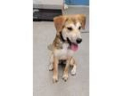 Adopt Jada a Tan/Yellow/Fawn Hound (Unknown Type) / Mixed dog in Gulfport