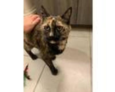 Nona, Domestic Shorthair For Adoption In Richmond, Virginia