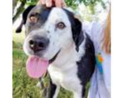 Adopt Diesel a Border Collie, Mixed Breed