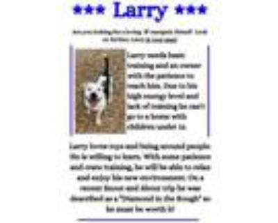 Adopt Larry a Pit Bull Terrier, Mixed Breed