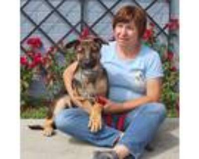 Adopt Nia von Nebra a German Shepherd Dog