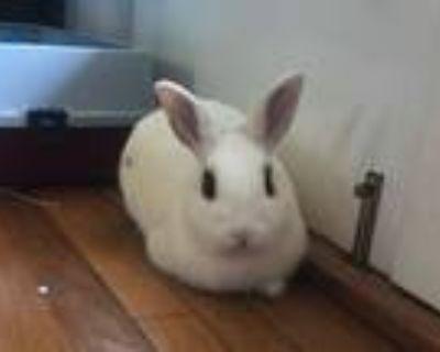 Adopt BASIC a Bunny Rabbit