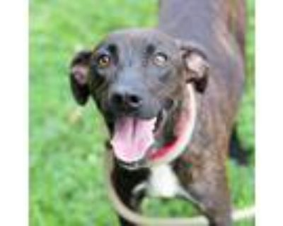 Adopt Lorelai a Brindle Terrier (Unknown Type, Small) / Mixed dog in Alpharetta