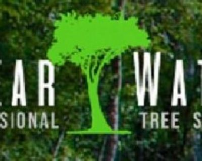 Clearwater Tree Service Pros