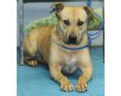 Deedi, Labrador Retriever For Adoption In Bainbridge, Georgia