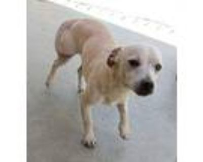 Marvelous, Terrier (unknown Type, Medium) For Adoption In Apple Valley