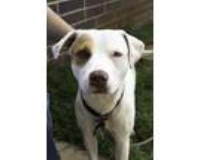 Adopt Hutch a White Mixed Breed (Medium) / Mixed dog in Chamblee, GA (32039646)