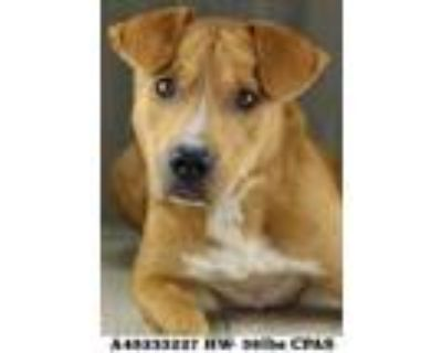 Jedi, Terrier (unknown Type, Small) For Adoption In Shreveport, Louisiana