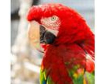 Adopt Burbank a Macaw