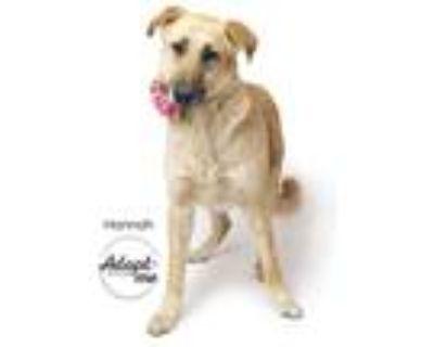 Adopt Hannah a Tan/Yellow/Fawn - with Black Anatolian Shepherd / Mixed dog in