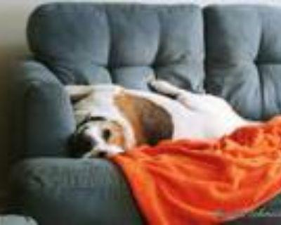 Adopt Carly Warren a Beagle