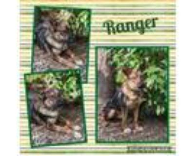 Adopt Ranger a German Shepherd Dog