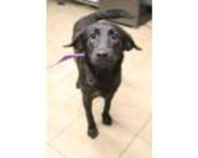 Adopt Strawberry a Black Mixed Breed (Large) / Mixed dog in Covington