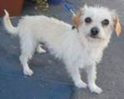 Squeaks, Terrier (unknown Type, Medium) For Adoption In Los Angeles, California