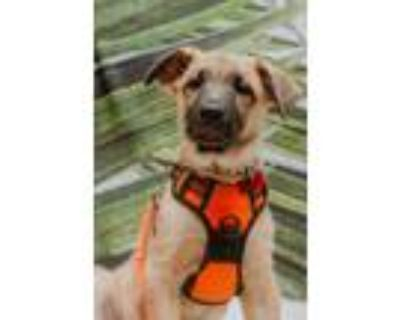Adopt Peter Cottontail a Shepherd (Unknown Type) / Mixed dog in Akexandria