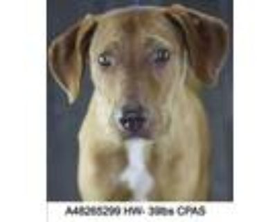 Lucy Lu, Terrier (unknown Type, Small) For Adoption In Shreveport, Louisiana