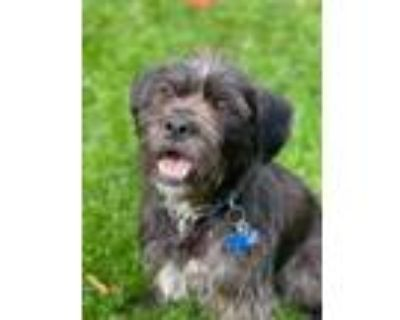 Adopt Dude a Black Terrier (Unknown Type, Small) / Mixed dog in Oak Creek