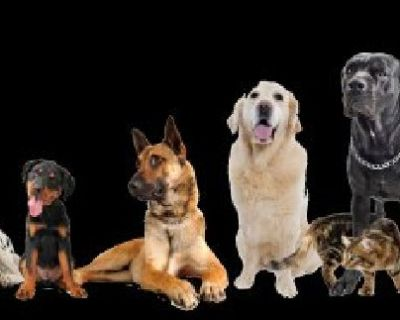 Dog Sitter Los Angeles At Affordable Cost.