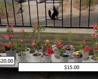 Monsoon Plant Sale