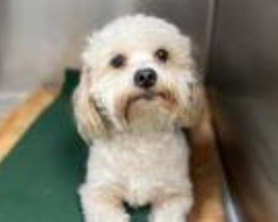 Adopt TOBY a White Mixed Breed (Medium) / Mixed dog in Los Angeles
