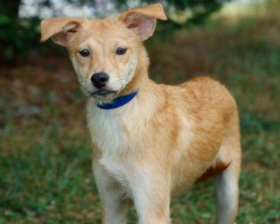 Aldo P 11355 - Mixed Breed (Small) - Adult Male