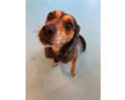 Adopt Sandy Aka Lauras Girl a Mixed Breed (Medium) / Mixed dog in Portsmouth