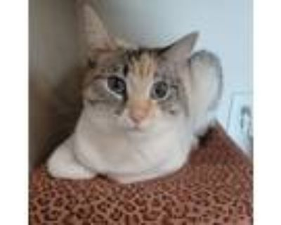 Adopt Jill (bonded with Jack) a Siamese