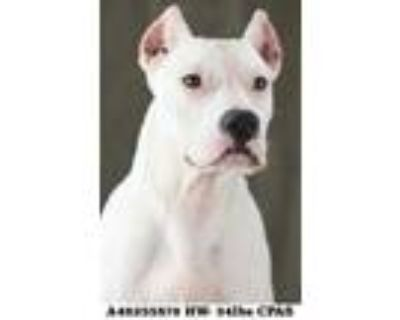 Pirate, Terrier (unknown Type, Small) For Adoption In Shreveport, Louisiana