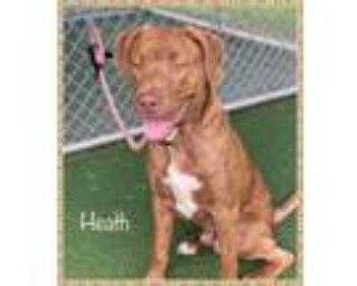 Adopt HEATH a Labrador Retriever