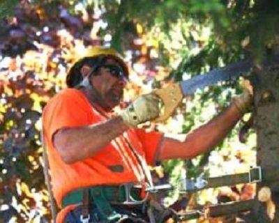 Duluth Tree Service