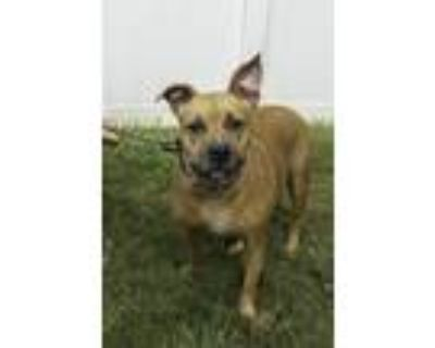 Adopt Unica a Mixed Breed