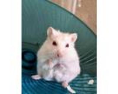 Adopt RUBY a Hamster