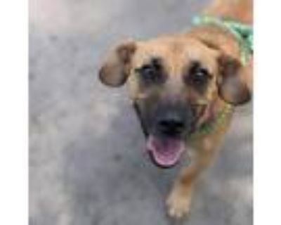 Adopt Caleb a Tan/Yellow/Fawn Terrier (Unknown Type, Small) / Mixed dog in