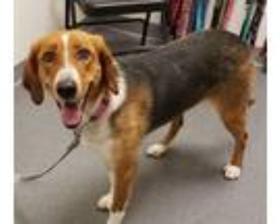 Adopt Daisy a Hound (Unknown Type) / Mixed dog in Albuquerque, NM (32035529)