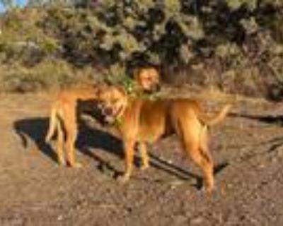 Adopt Adorable MOLLY AND SISTER ROSITA a Labrador Retriever