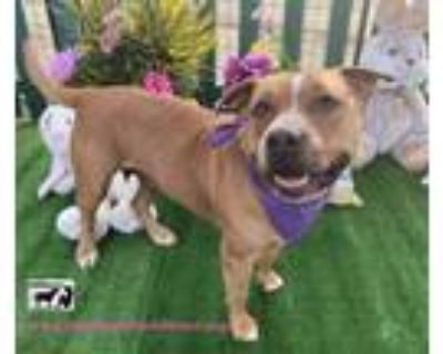 Adopt Adorable Rosita and sister Molly a Labrador Retriever