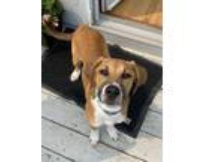 Adopt Garth Brooks a Tricolor (Tan/Brown & Black & White) Hound (Unknown Type) /