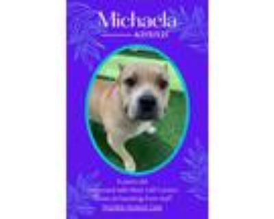 Adopt Michaela last days!!! Need hospice care a Pit Bull Terrier