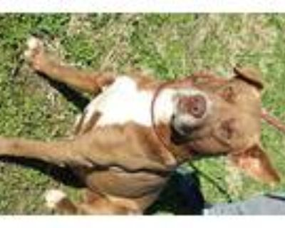Clive, Terrier (unknown Type, Medium) For Adoption In Abbeville, Louisiana