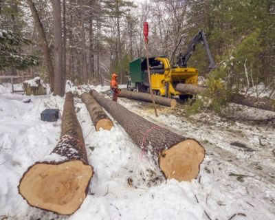 Tree Cutting Service | Sioux Falls Tree Service