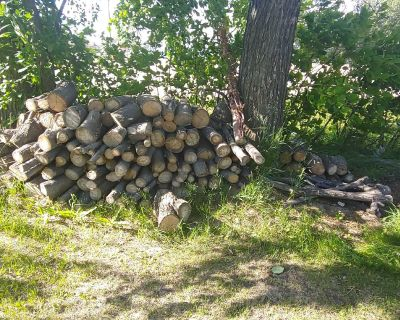 Tons of firewood. Aged 1 year.