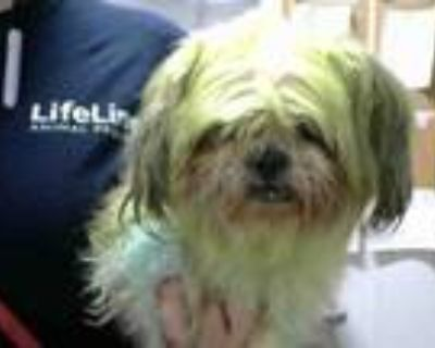 Adopt KALE a Yorkshire Terrier, Mixed Breed